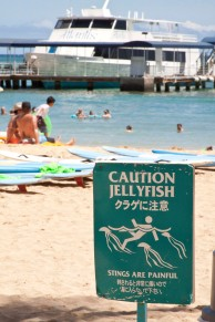Jellyfish at Waikiki Beach.