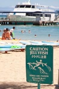Jellyfish at Waikiki Beach.