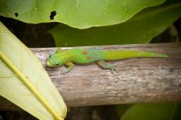 Gary the Gecko.