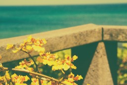 Yellow Flowers Beachside.
