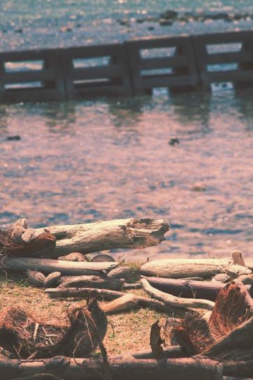 Driftwood on the Beach.