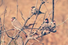Birds at Diamond Head.