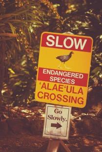 Endangered Birds Sign.